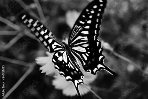 Canvas Print Close-up Of Butterfly On Plant