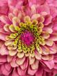 Leinwandbild Motiv Macro Shot Of Pink Flower
