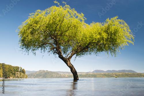 Photo Árbol en Lago