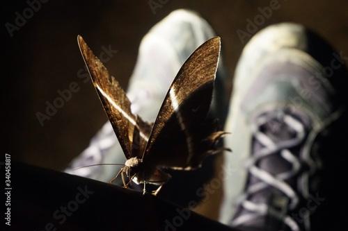 Fotografie, Obraz Macro Shot Of Dry Leaf
