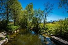 Narrow Stream Along Trees On Field