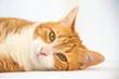 Adorable ginger tabby cat laying, staring at camera.