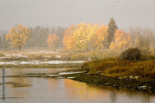 Fototapety, obrazy: Scenic View Of Trees During Autumn