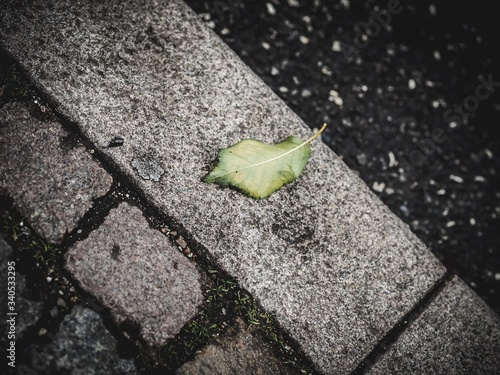 High Angle View Of Leaf On Footpath Canvas Print