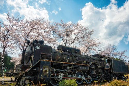 Fototapety, obrazy: 満開の桜と古い機関車