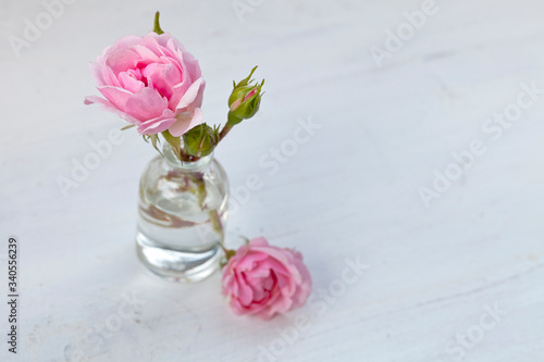 Leinwand Poster Delicate Pink Roses In Vase