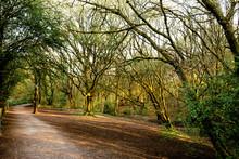 Borsdane Woods Local Nature Re...