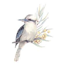 Watercolor Bird Illustration. Wildlifw Of Australia.