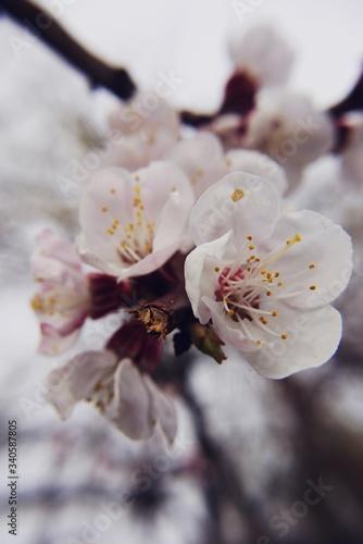 Fototapeta Close-up Of White Flowers On Branch obraz na płótnie