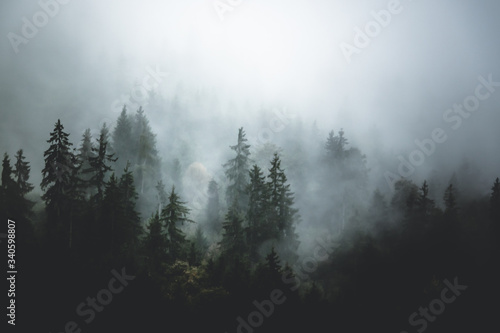 Fototapety, obrazy: Trees Against Sky During Winter
