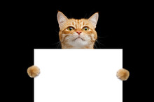 Funny Cat Showing A Placard Is...