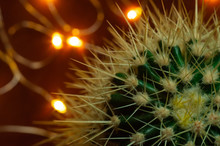 Green Cactus With Long Thorns....
