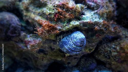 Close up image of saltwater snail invertebrate sea creature Canvas Print