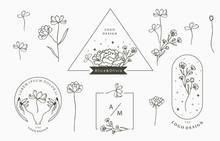 Black Flower Logo Collection W...