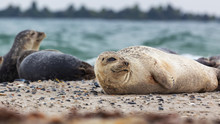 Helgoland, Dune Island, Halich...