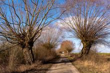 Narwiański Park Narodowy. Rzeka Narew. Szosa Kruszewska, Waniewo, Kurowo, Podlasie, Polska