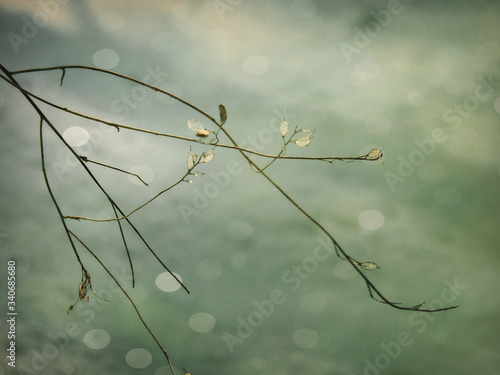 Fototapety, obrazy: Close-up Of Plant Against Water