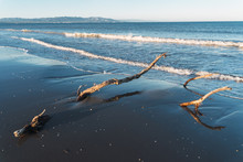 Dead Logs Stuck In The Sand On...