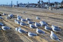 Seagulls On Tire Tracks At Beach