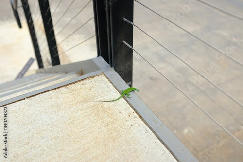 High angle shot of a little green anole chilling on a staircase Canvas Print