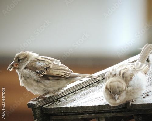 Fotografie, Obraz Close-up Of Birds Perching Outdoors