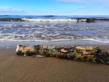 Fallen Log On Sand Beach With Baltic Sea On Background