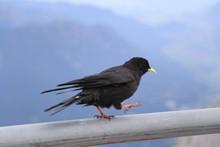 Close-up Of Bird Perching On Pole