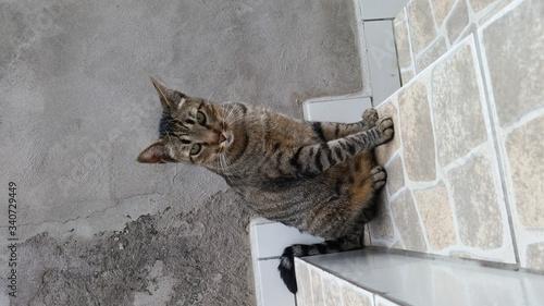 Fényképezés Portrait Of Cat Sitting On Floor