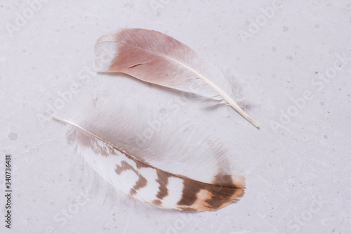 Two fluffy tender pockmarked feathers and feather lies on a light gray modern background Wallpaper Mural