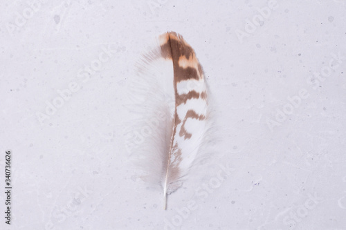Photo Fluffy tender pockmarked feather and feather lies on a light gray modern background