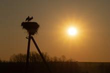 Family Of Storks. Large Bird's...