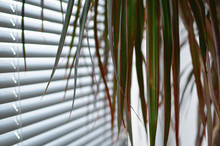 Plant With Long Leaves Near Th...
