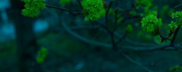 Kwiaty liście na drzewie z bliska.