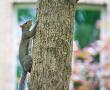 A Squirrel Climbing Up A Tree Trunk