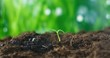 Watering a young seedling from hand. Care for the environment. Salvation and