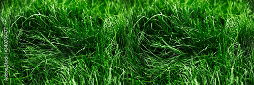 Fotografia Natural green grass background, fresh lawn top view