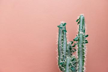 Zeleni kaktus na ružičastom