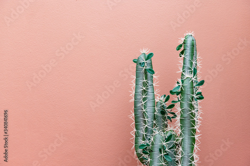 Green cactus on pink Fototapete