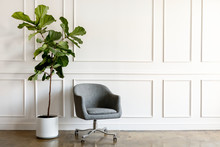 Office Chair And A Fig Tree