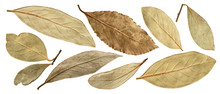 Dried Bay Leaf Isolated On Whi...