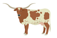 Texas Longhorn Cow Breeds Of Domestic Cattle Flat Vector Illustration Isolated Object On White Background