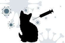 Vector Silhouette Of Cat With ...