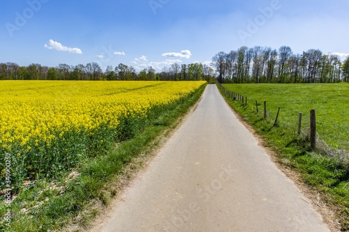 Beautiful bast field with green wildflowers and a blue sky #340900252