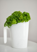 Green Curly Parsley In A White...