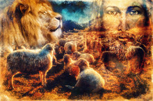 Jesus The Good Shepherd, Jesus And Lambs And Lion.