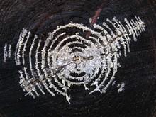 High Angle View Of Mycelium On Tree Stump