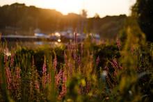 Purple Flowering Plants During Sunset