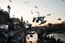 Flying Birds In Paris