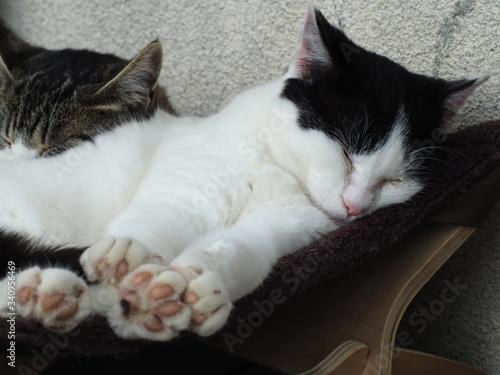 眠っている猫 Fototapeta
