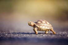 Close-up Of Tortoise On Footpath